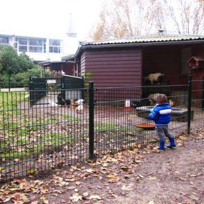 kweektuin_kinderboerderij